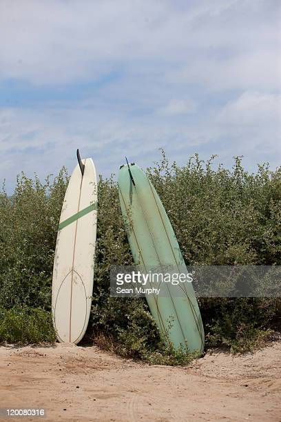 White and green surf board against a green bush