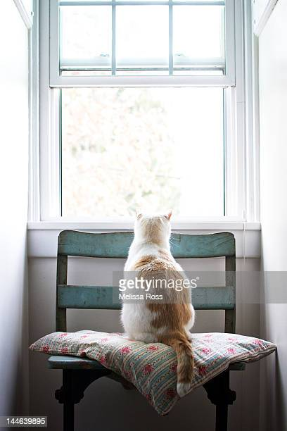 White and orange cat looking out of open window