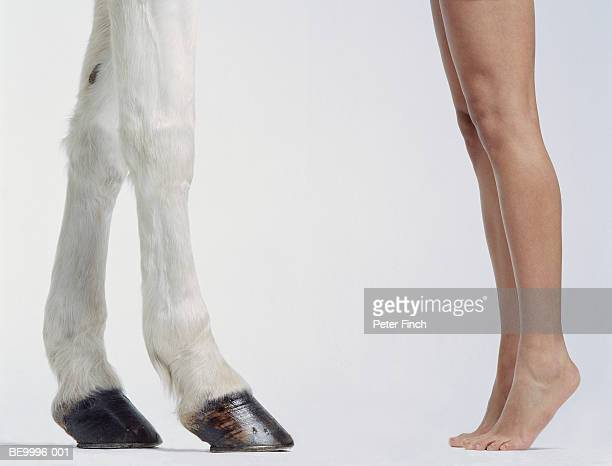White Andalucian horse with woman on tiptoe, low section