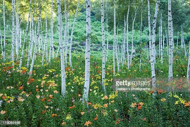 White birch lily garden