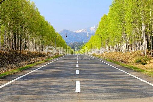 White birch Road at the foot of Mikuni Pass of Hokkaido : Stock Photo