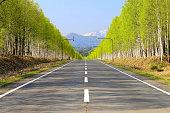 White birch Road at the foot of Mikuni Pass of Hokkaido.