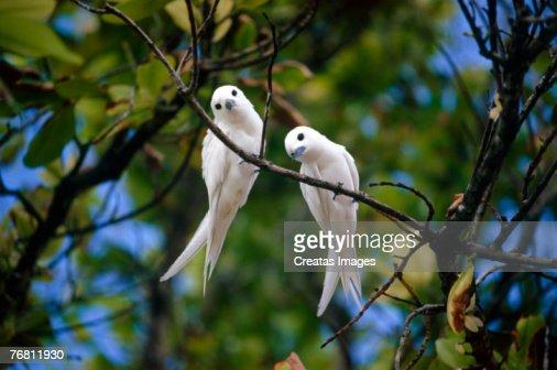 White birds in tree : Stock Photo