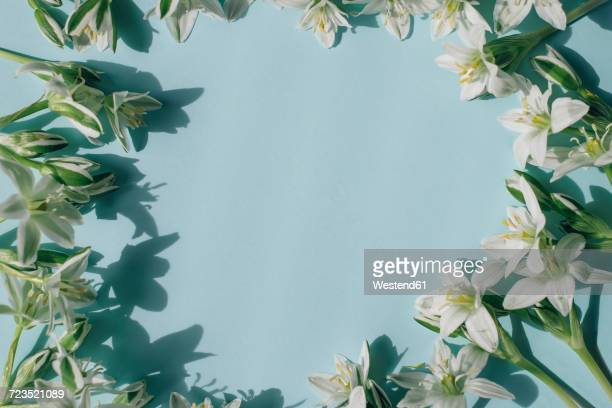White blossoms building frame on light blue background