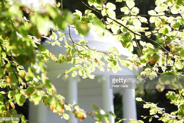 White building behind summer leaves