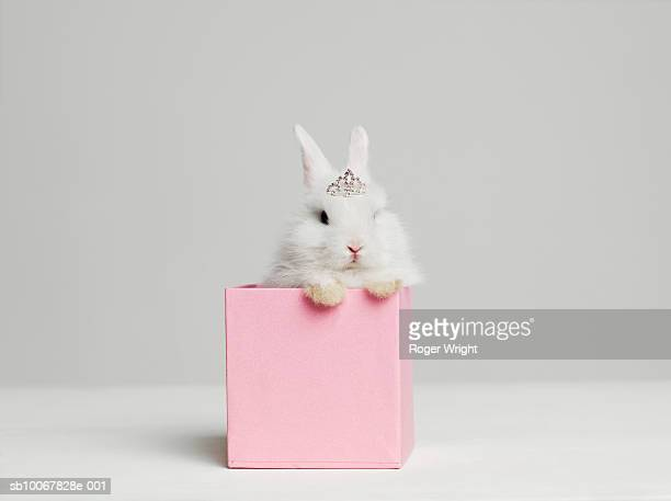 White bunny rabbit wearing tiara sitting in pink box, studio shot