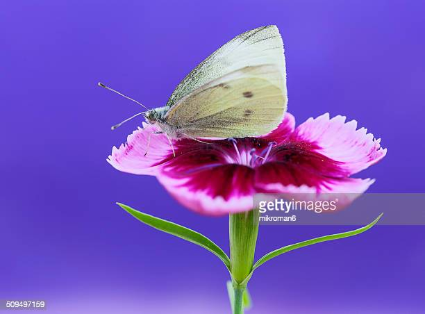 White butterfly on blue background