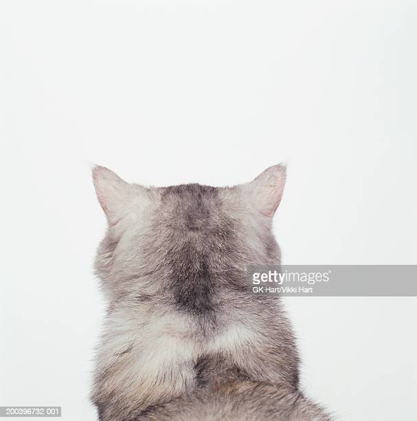 White cat against white background, rear view, close-up
