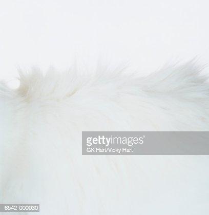 White Cat Fur