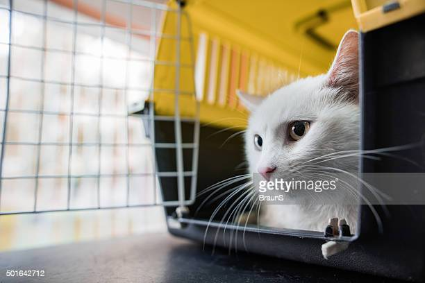 White cat in a cage.