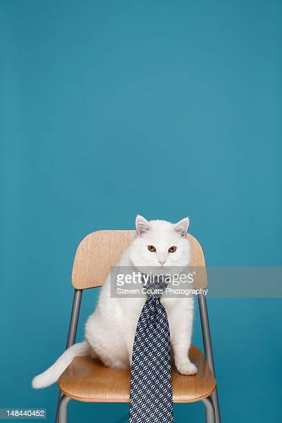 White cat in  tie
