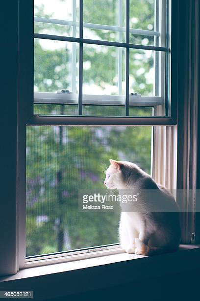 White cat looking out an open window