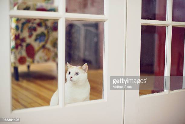 White cat looking through window of French door.
