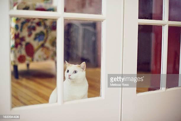White cat looking through window of French door.