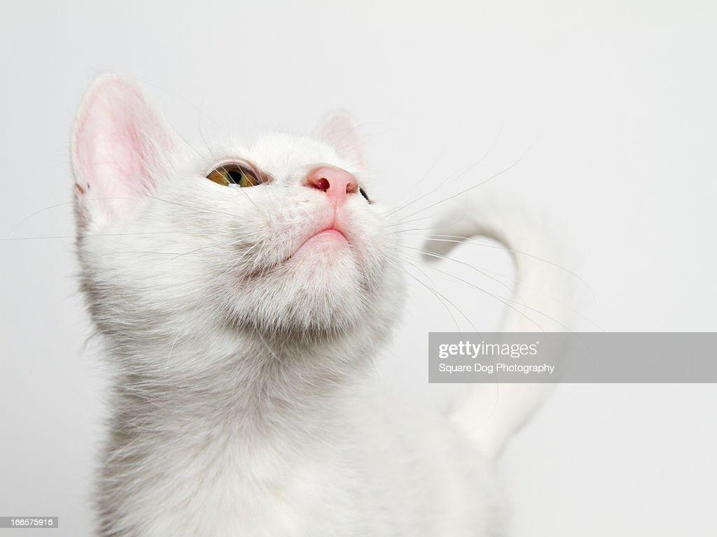 white cat : Stock Photo