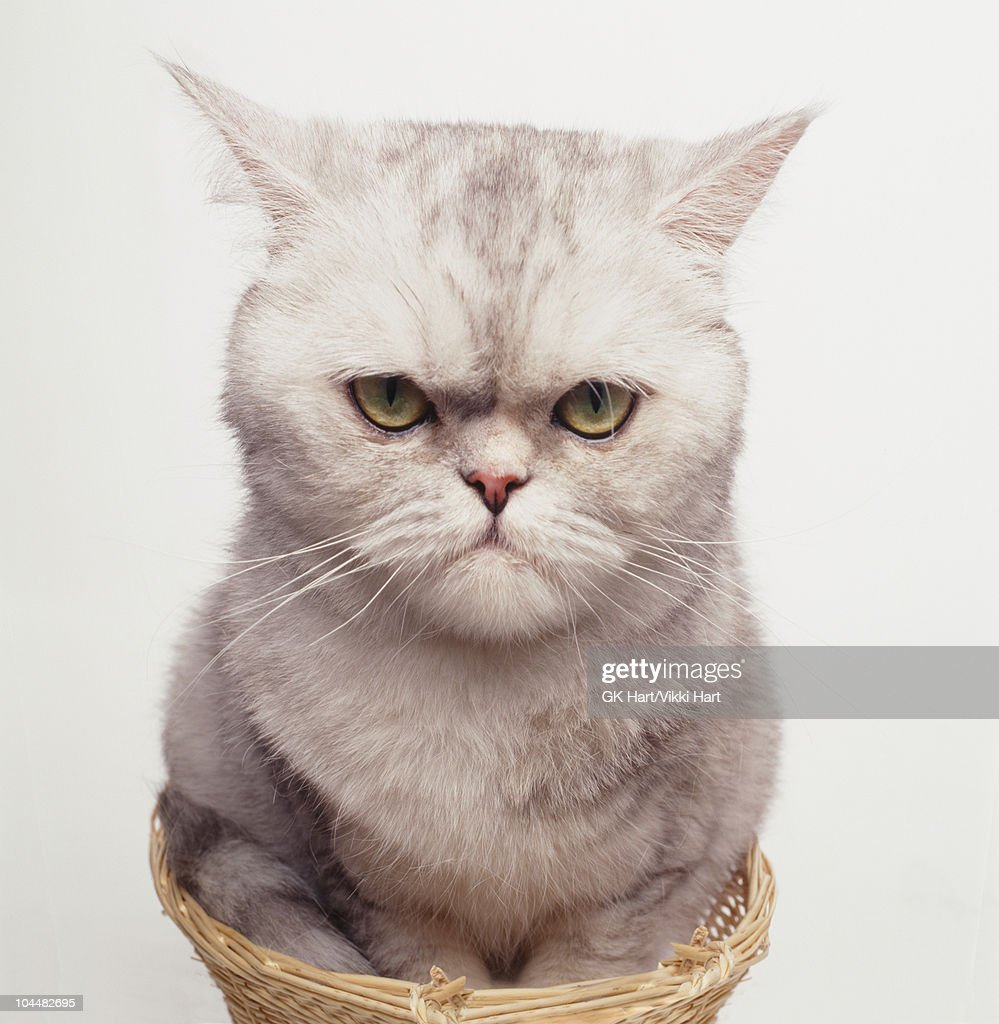 White Cat Sitting in Small Basket : Stock Photo