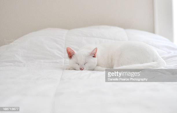 White cat sleeping in a white bed