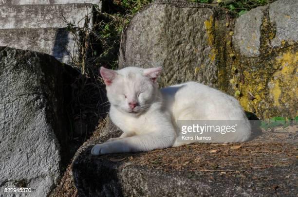 White cat sleeping in the sun