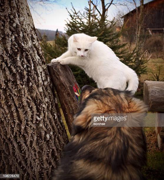 Weiße Katze schaut in Hund im Freien
