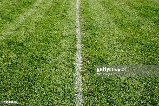 White center line on freshly cut grass. A sports playing surface.