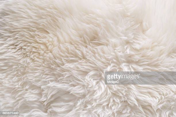 White Color Sheep Fur