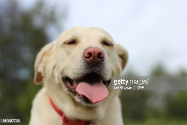 White dog in a happy mood
