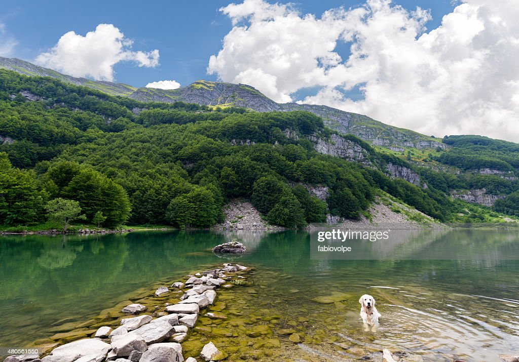 white dog in the lake : Stock Photo