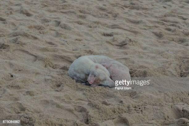White dog sleep on sand beach