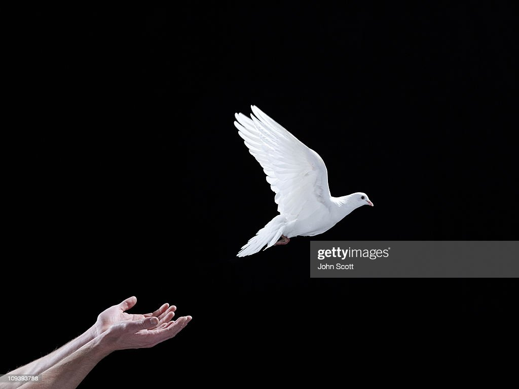 A white dove flying out of hands