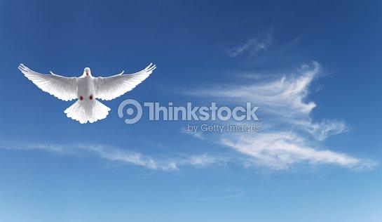 White Dove In A Blue Sky Symbol Of Faith Stock Photo Thinkstock