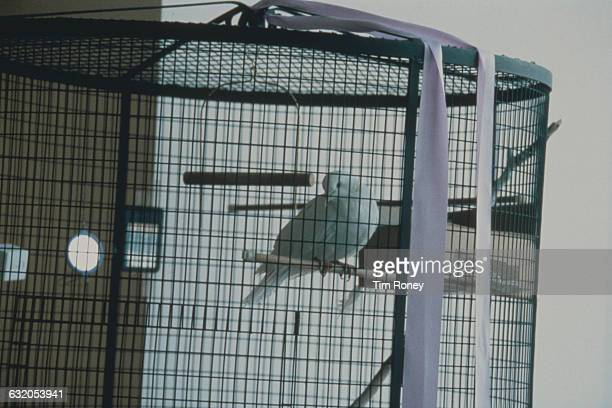 A white dove in a cage decorated with a purple ribbon in the reception area at Paisley Park Studios the home and workplace of American...