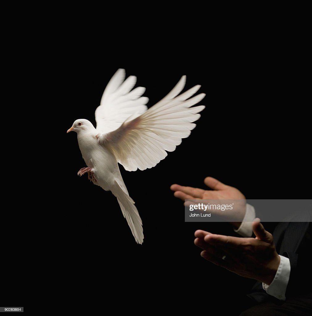White Dove Release