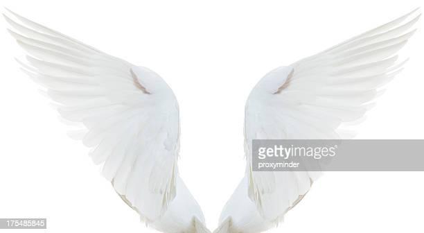 White Dove Gespreizte Flügel