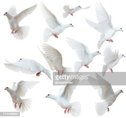 White Doves flying away