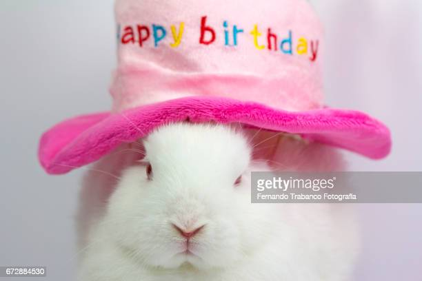 White dwarf rabbit with a hat in the shape of a cake congratulating happy birthday