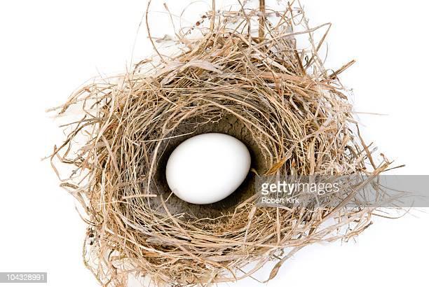 White Egg in Bird's Nest