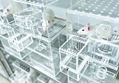 Animal experiments for urine collection using white experimental rats in metabolic cages
