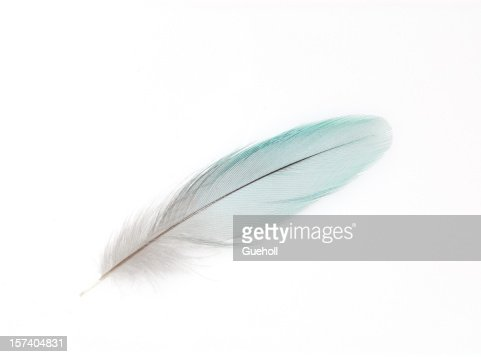 A white feather on white background