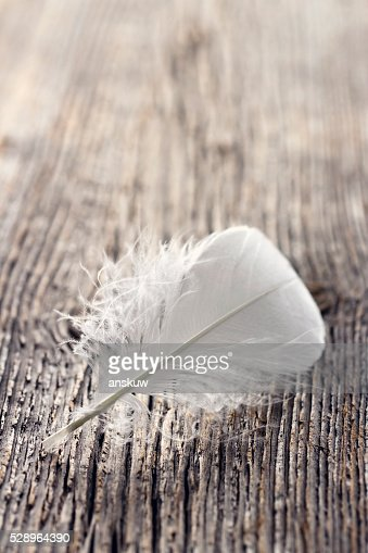 White feather : Stock Photo