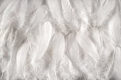 White feathers background, close-up full frame image of furry snow white contour feathers composed as soft carpet, viewed from above