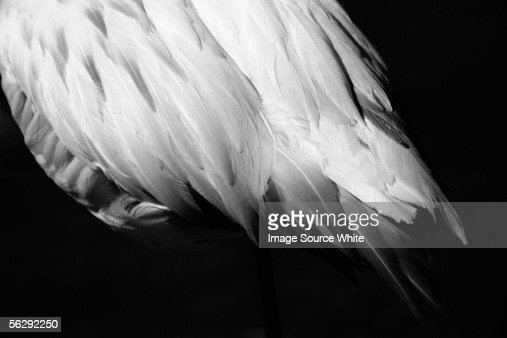 White feathers : 스톡 사진
