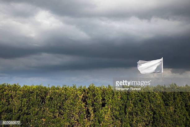 White flag flying over hedge