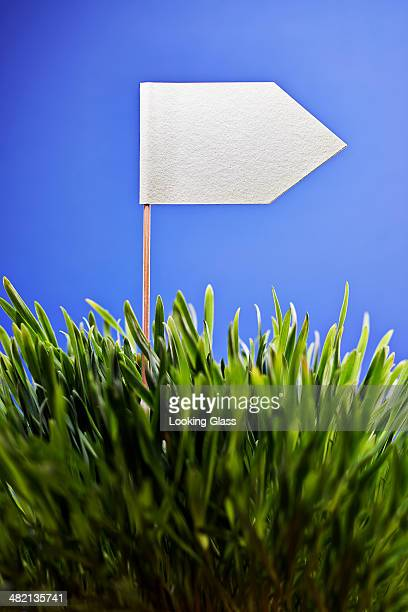 White flag planted in grass