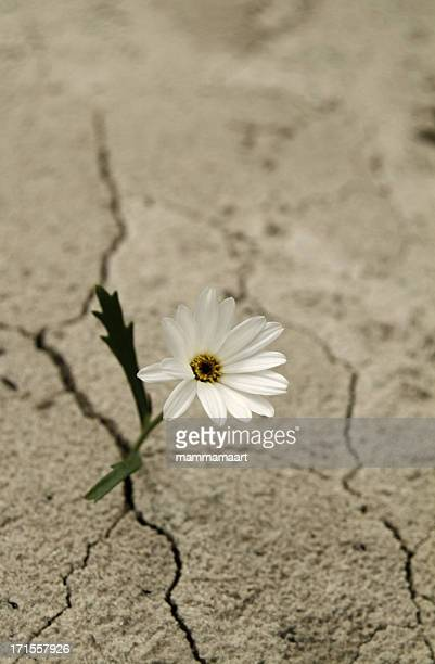 White flower growing between cracks in cement