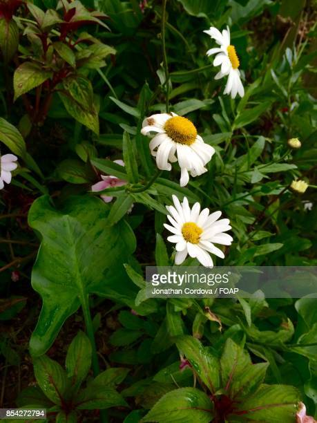 White flower growing on plant