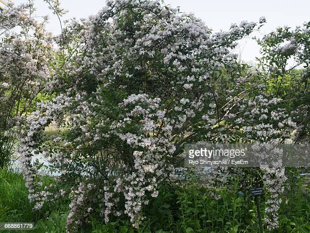 White Flowers Blooming On Tree