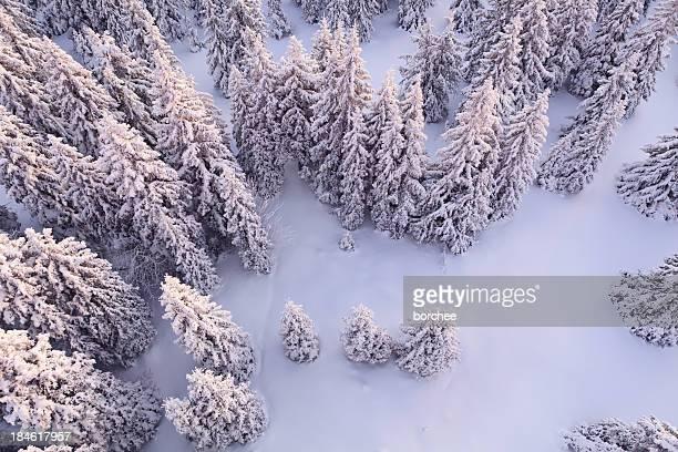 Forêt blanc White