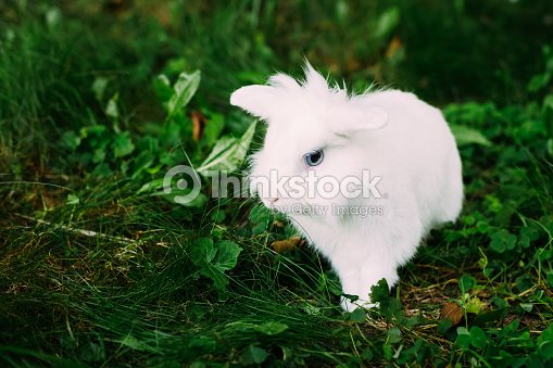 White Funny Bunny Rabbit On Green Grass Stock Photo Thinkstock