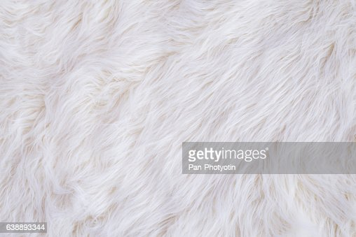 White Fur Texture : Stock Photo