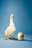 White Goose and Egg